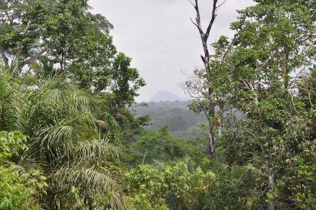 Nigeria Forest
